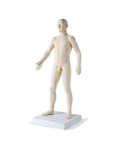 Akupunkturmodell Seirin Original Mann, 70 cm mit Sockel