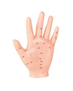 Akupunkturmodell Hand, 18cm